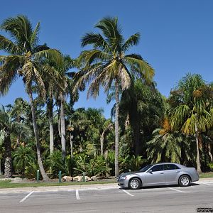 My Chrysler with my coconut trees